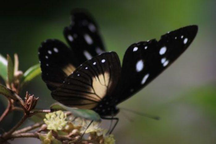 butterfly-for-god-renews-poem-